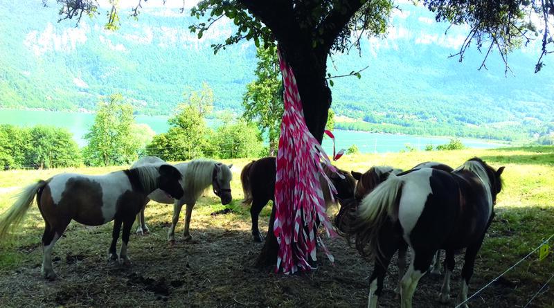 Lac d'Aiguebelette – Les chasses au trésor à dos de poney