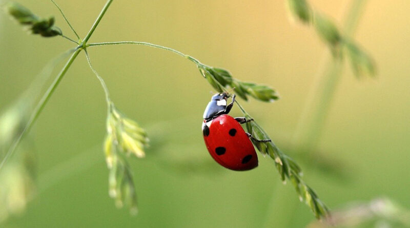 Nature – Reconnaître les petites bêtes du jardin